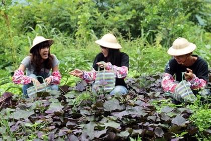 109年度旅行業推廣國民團體農業旅遊獎勵