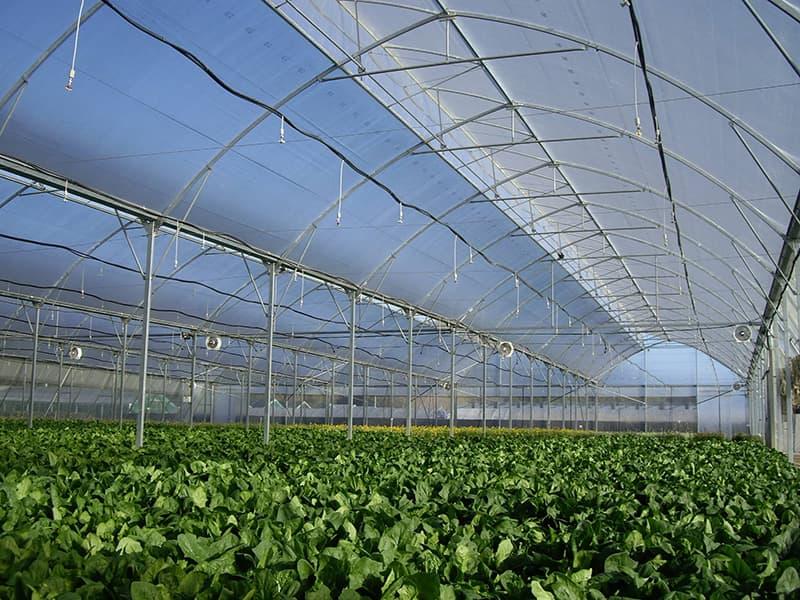 farm43-5