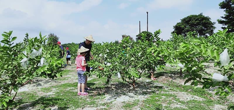 farm71-2