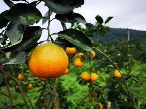 大進休閒農業區