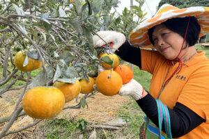 橙色農作休閒果園