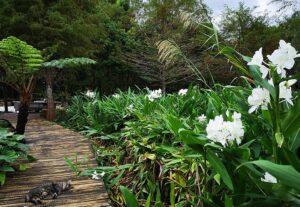 花泉休閒農場